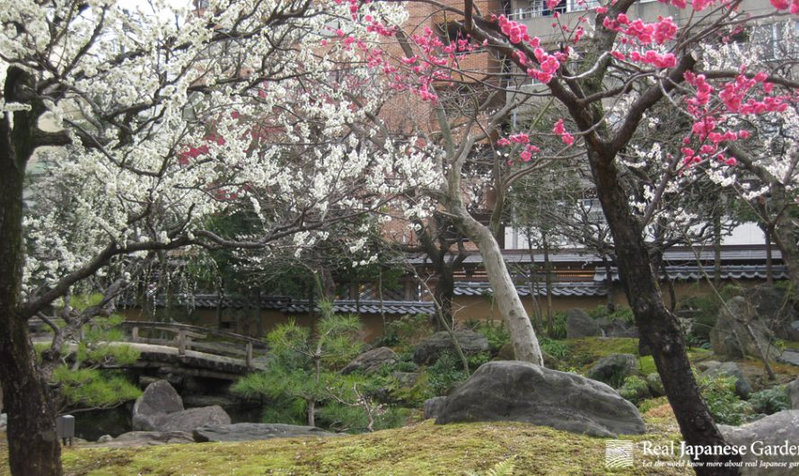 The Best Plum Blossoms in Japanese Gardens