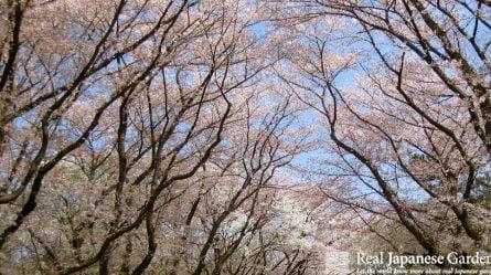 Best Top Sakura Spots