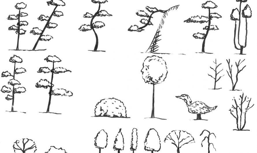 Japanese tree shapes 樹形 Jukei