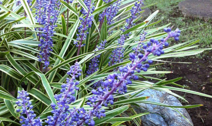 Works in the Garden in October