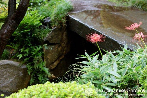 5 Bulbs for your Japanese garden