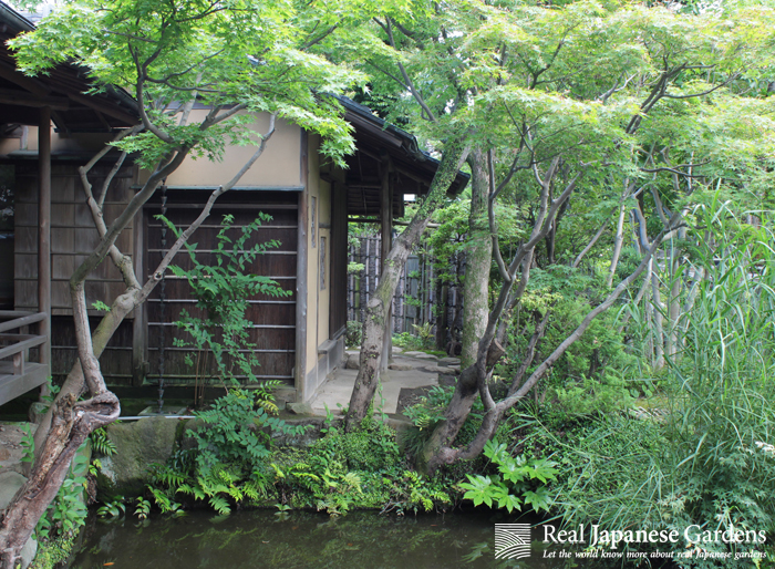 Craving Nature but Can't Stand the Heat – Gardens to visit in Tokyo