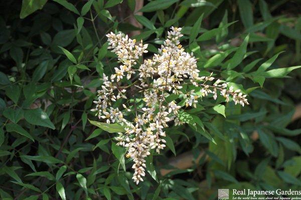 Auspicious plants in Japanese garden design