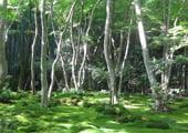 Giou-ji temple garden in Kyoto Arashiyama