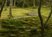 Hakone Museum of Art Moss Japanese Garden