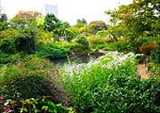 Mukojima Hyakkaen Japanese garden in Tokyo
