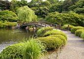 Shinjuku Gyoen Japanese Garden in Tokyo