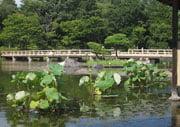 Japanese Garden Term Glossary