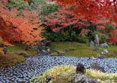 Hogon-in temple garden in Kyoto Arashiyama
