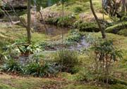 Plants in the Japanese Garden Vol.1