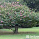Auspicious Plants in the Japanese Garden