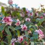 Plants in the Japanese garden Vol1