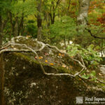 Hakone Museum of Art by Real Japanese Gardens